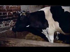 """คนเย็ดหีวัว""""คนxxxสัตว์""""เจ้าของสุดหื่นให้วัวตัวเมียเลียควยก่อนจับหางกระเด้าหีวัวอย่างเมามัน"""
