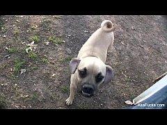 คลิปโป๊คนไทยเย็ดหีหมาตัวเมีย เรียงคิวรุมโทรมข่มขืนหมาข้างทางตอนกลางคืน เสียงไทย100%